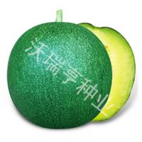 供应沃瑞亨芳香雅州蜜甜瓜种子